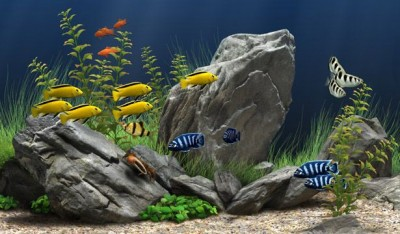 Dream Aquarium 1.1090 screenshot