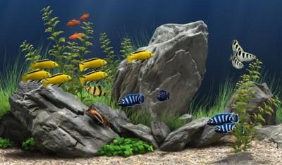 Dream Aquarium 1.1090 screenshot