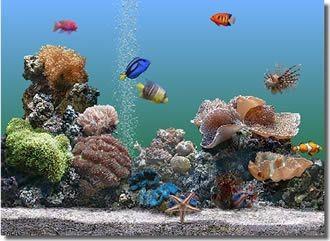 Marine Aquarium 2.6 screenshot